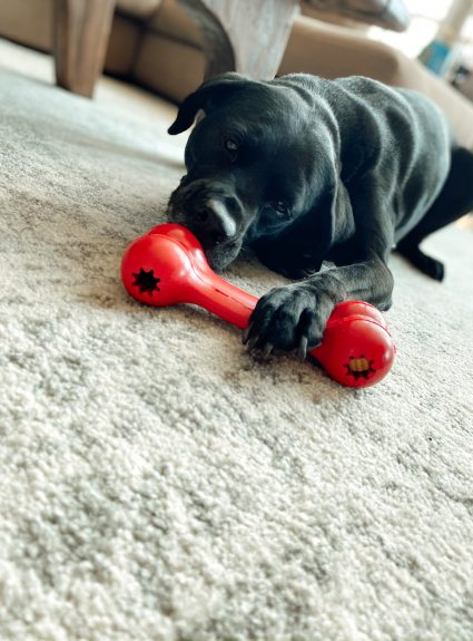 Why Your Dog Needs a Kong Box: A full review of the Kong dog subscription box.